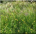 TG3103 : Greater Bird's foot trefoil and Tufted vetch by Evelyn Simak