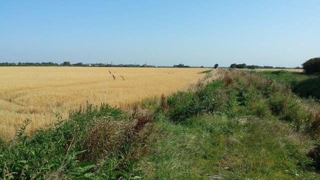 Fields near Formby