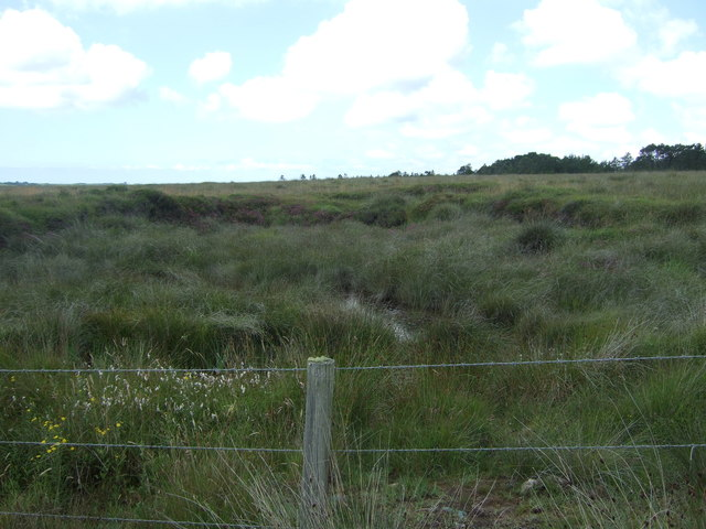 Boggy ground, Goonhilly Downs