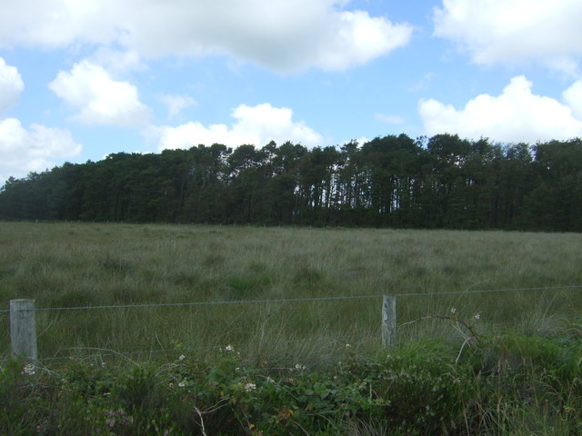 Woodland, Goonhilly Downs