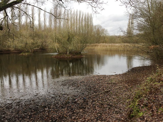 Small pool at Brandon Marsh Nature Reserve, southeast of Coventry
