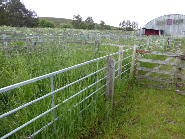 Overgrown sheep pens at Lairg auction Mart