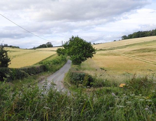 Lane leading to Hartridge Farm