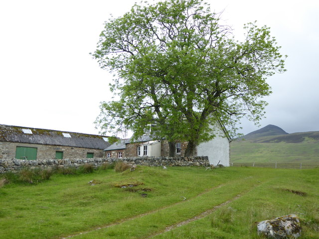 Two ash trees (Fraxinus excelsior) at Greamachary