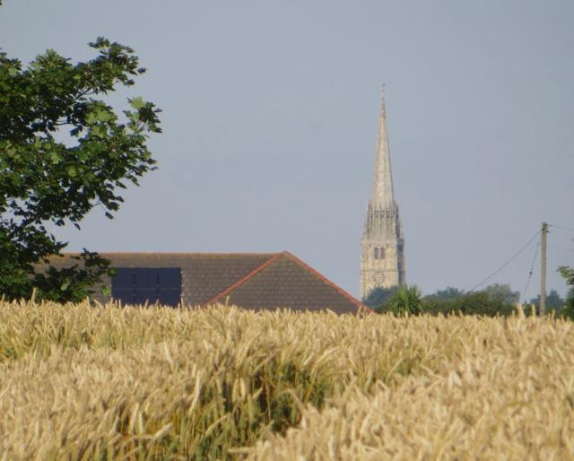 Wheat near Patrington
