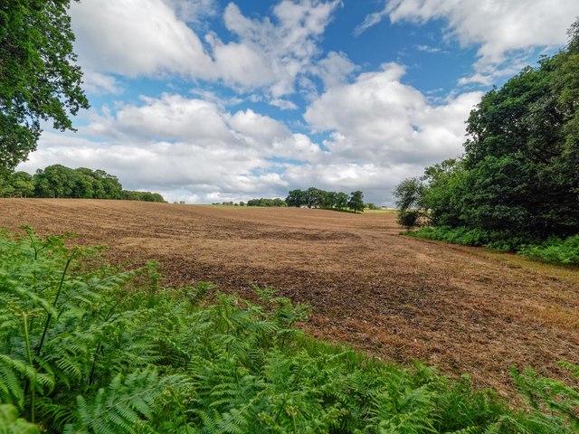 Field Margin Drummondreach Wood