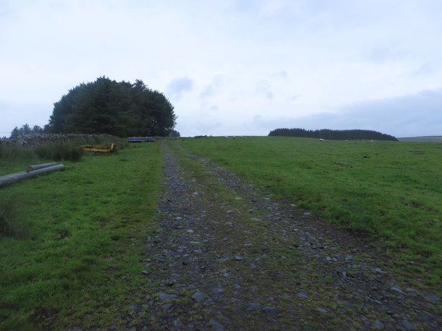 Track on Thirlwall Common