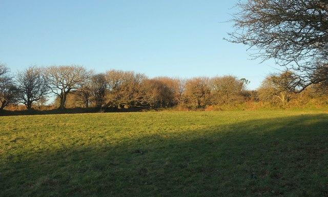 Field near Pendrift