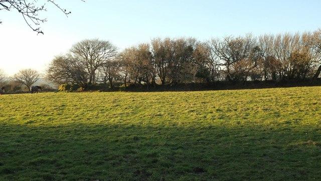 Field near Pendrift #2