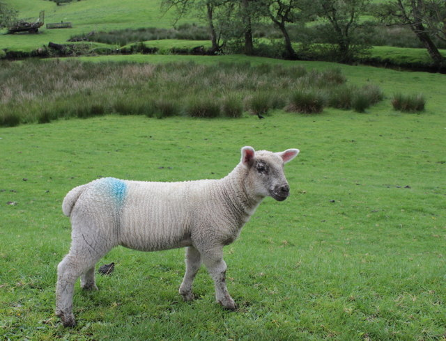 Lamb at Ludwell