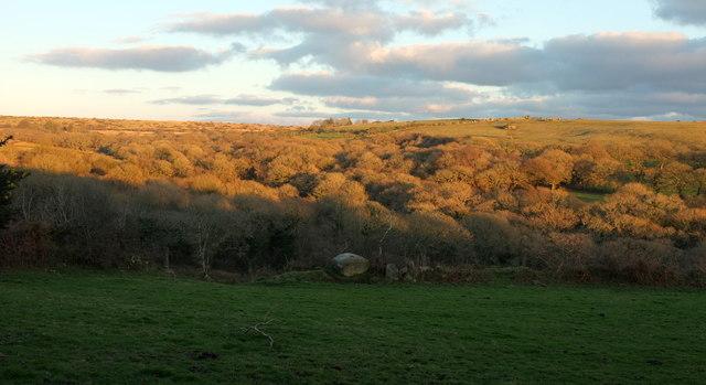 Wooded valley near Blisland