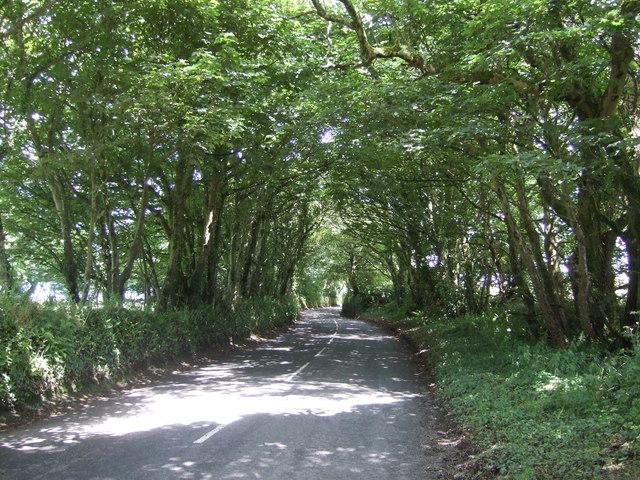 Minor road through woodland, Aragal