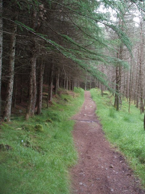 Forest track on Jock's Road in Glen Doll Forest