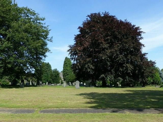 Copper beech, Heanor Cemetery