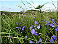C9844 : Wildflowers, Feigh by Kenneth  Allen
