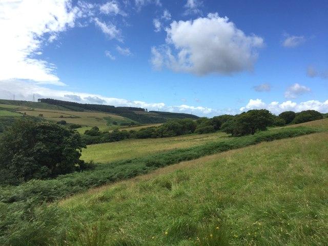 Slopes of Mynydd Bychan