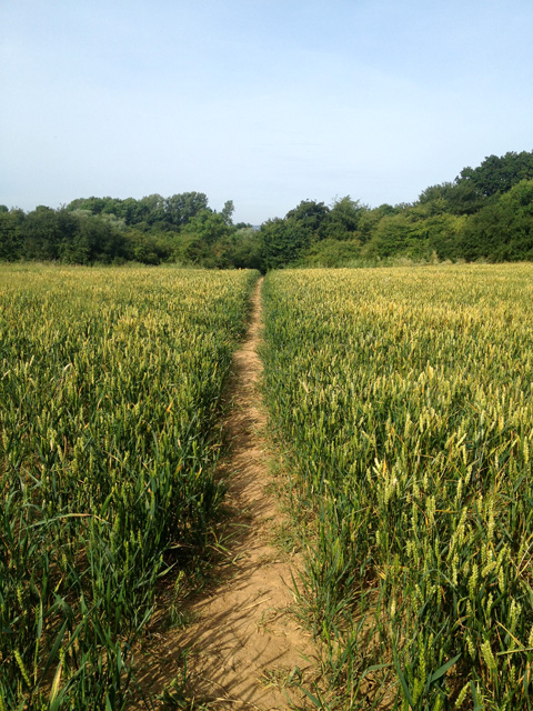 Footpath through wheat field off Toft's Lane