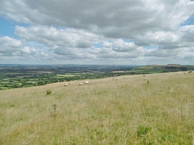 Bratton, sheep grazing