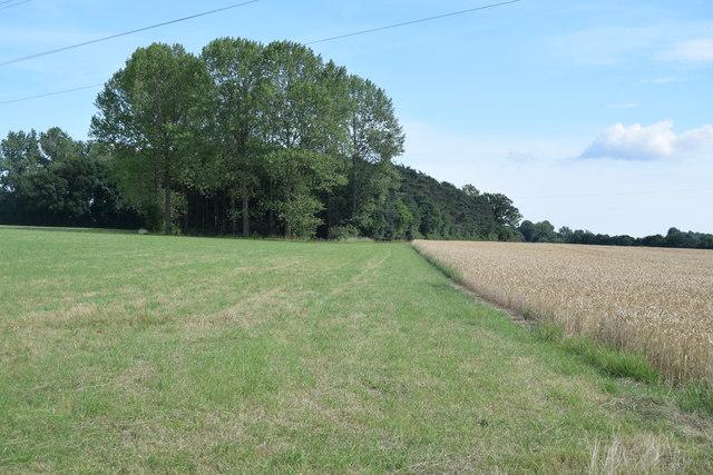 Fields and copse near Stone's Farm