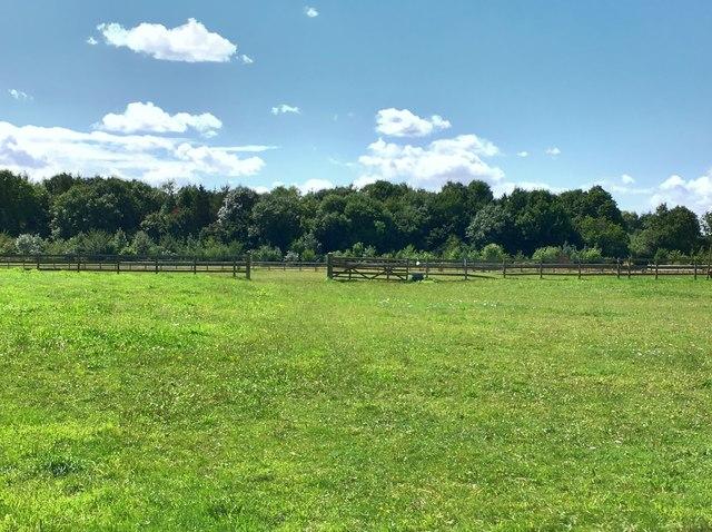 Plantation by Pond Farm