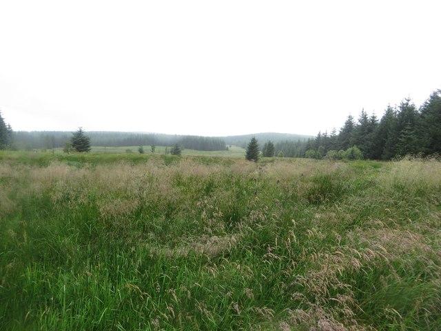Treeless area beside Buckbog Sike