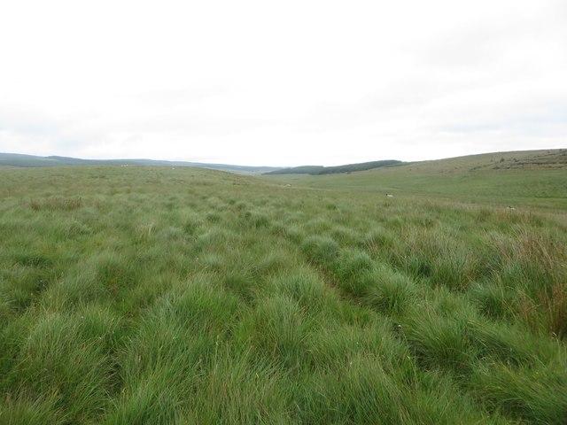 Grassland in Wark Forest