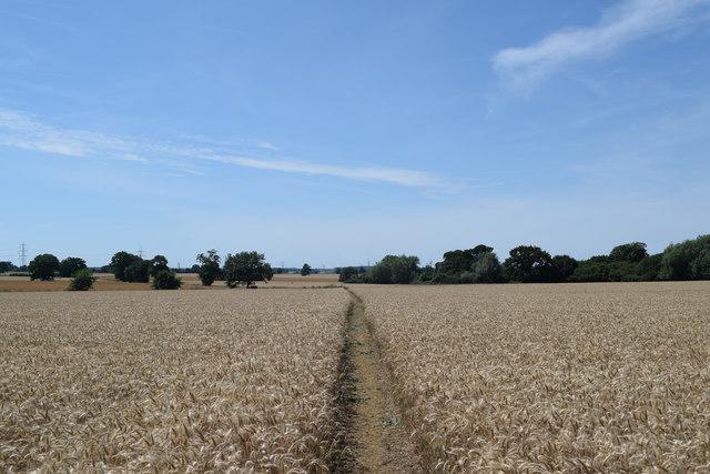 Footpath west of Colliersley Wood