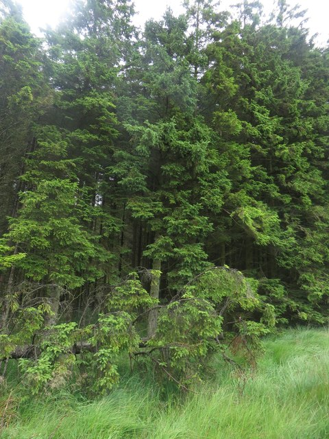 Trees in Wark Forest
