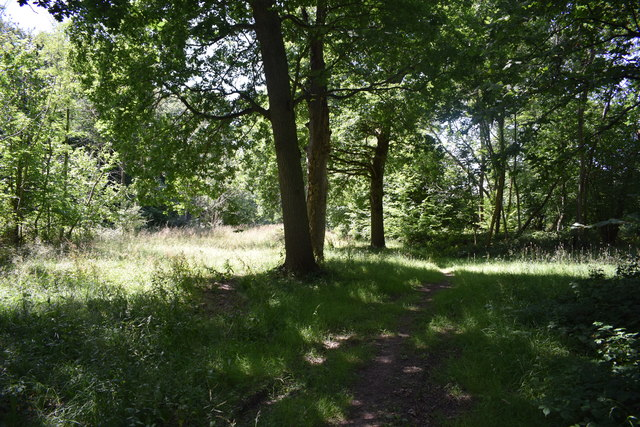 Path in Colliersley Wood