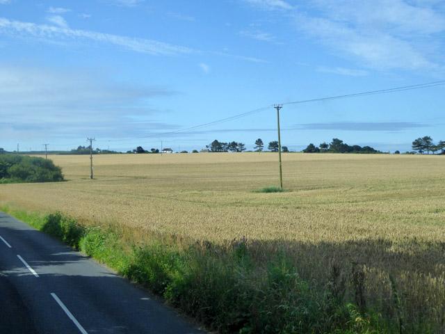 Wheat field south of Billingham Farm