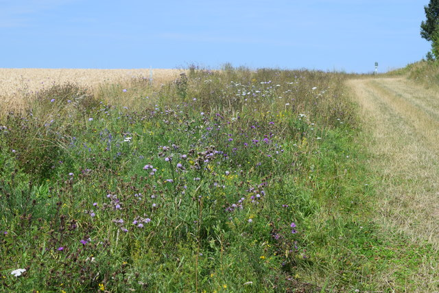 Wildflowers on the field margin