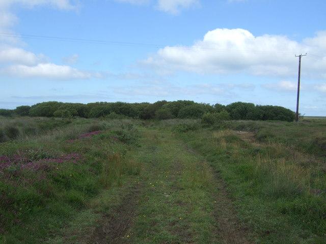 Farm track, Lizard Downs