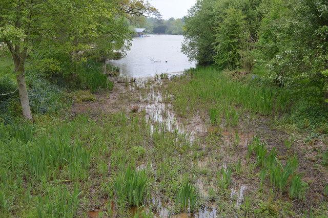 Marshy lake edge, Dunorlan Park