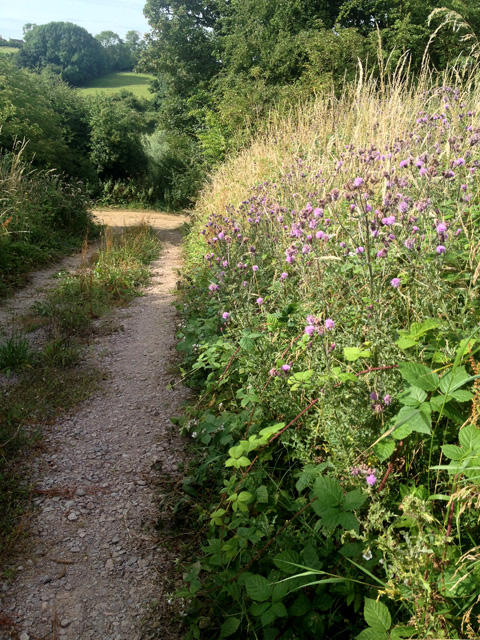 Field track off Toft's Lane