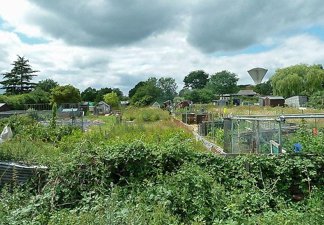 Dereham Allotment Gardens