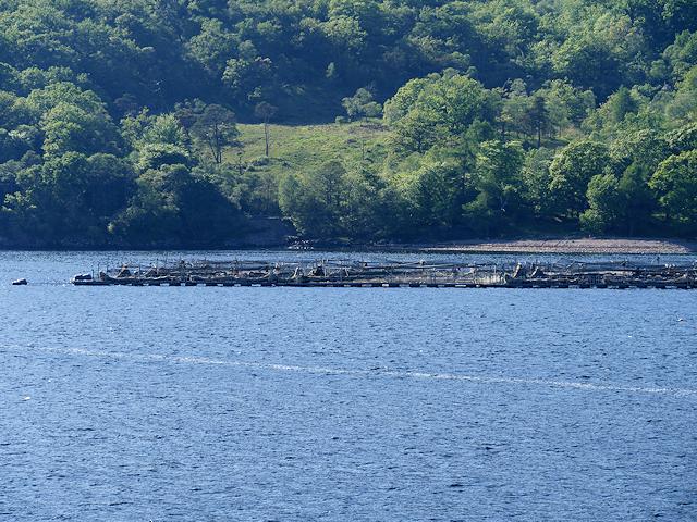Salmon Farm in Loch Linnhe