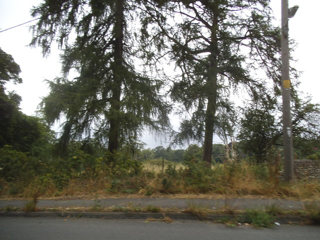Conifers by Luton Road, Markyate