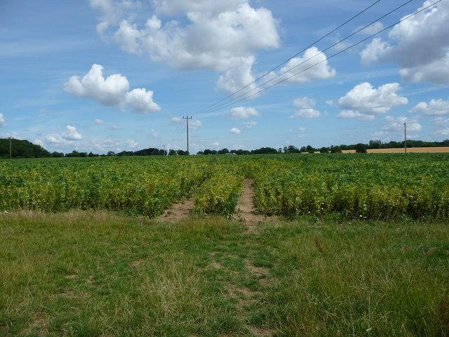Arable field, east of Hillwatering Farm