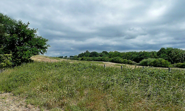 Fields And Woods Near Thuxton