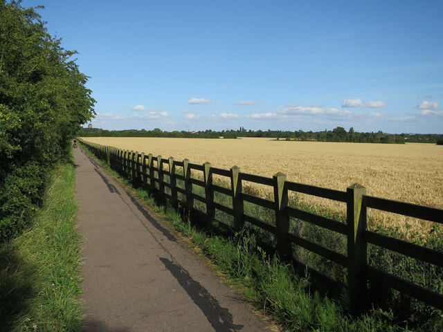 Ripe wheat by Coton footpath