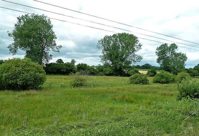 Fields Near Wymondham