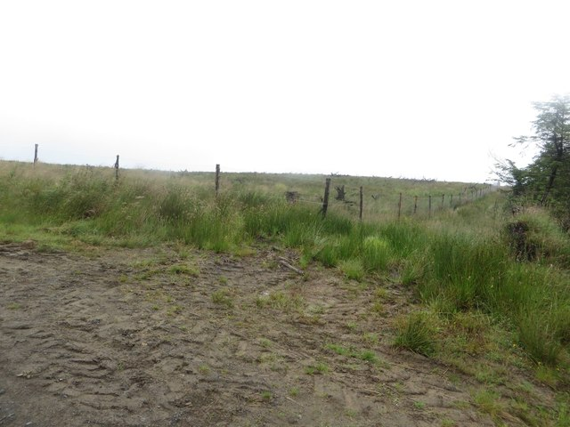 Boundary between blocks of Wark Forest