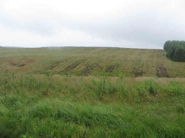 Treeless area in Wark Forest