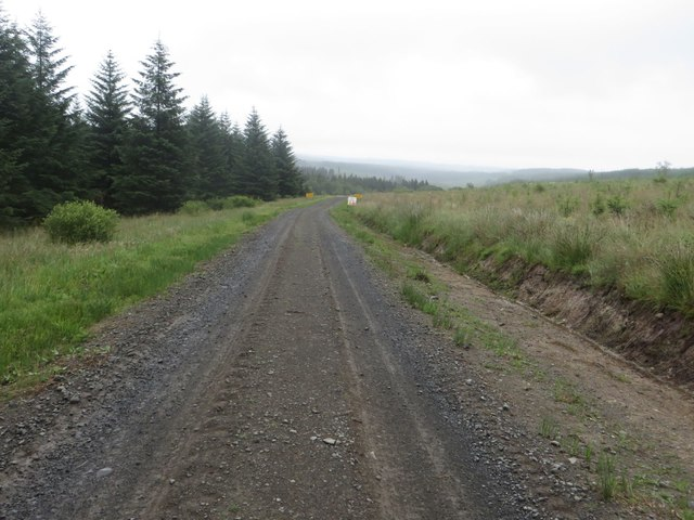 Forest track east of Watch Hill