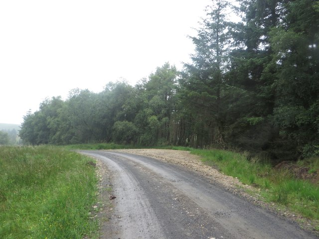 Forest track south of Green