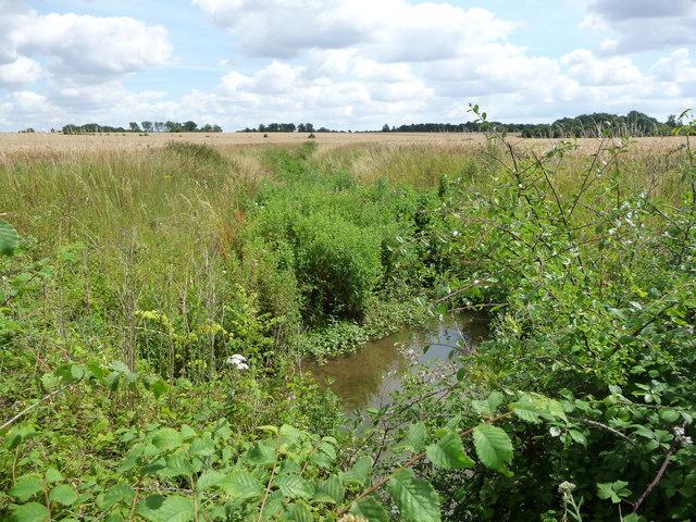Drained farmland, east of Mellis Road