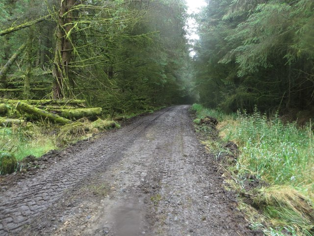 Forest track and footpath, Wark Forest