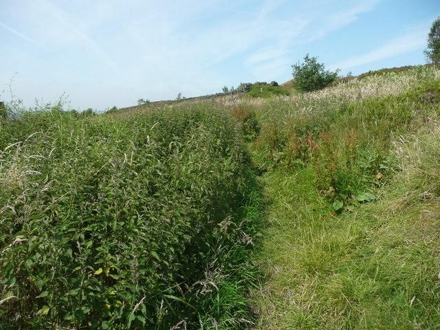 Nettles on Wadsworth FP58 near Old Lathe, Chiserley