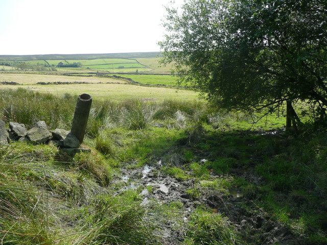 A boggy part of Wadsworth FP74, Chiserley