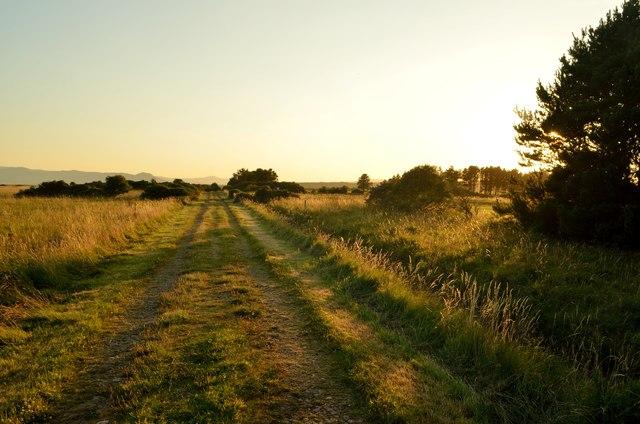 Track through Golden Fields near Dornoch, Sutherland